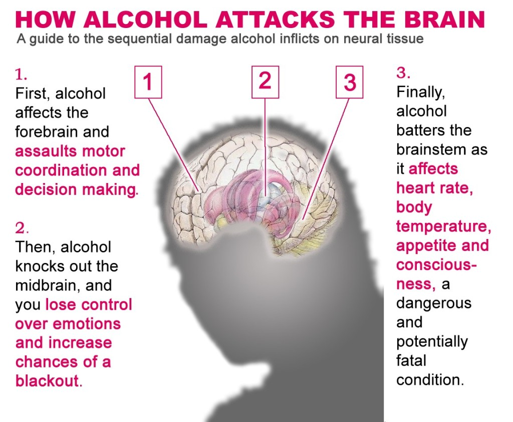 Effects of alcohol into your body